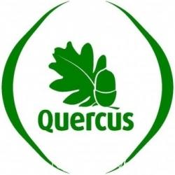 quercusc.jpg