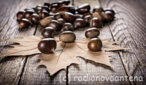 Fotolia_126059930_Subscription_Monthly_M