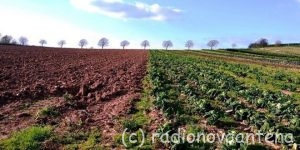 agricultura-campo-trees-2991543_960_720-660x330